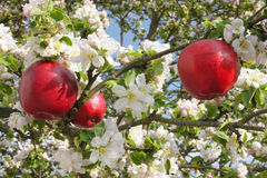 01 a red-apples-apple-tree-33460913