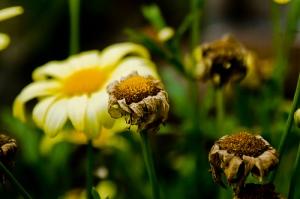 01 a flower 2759818786_2f2dd45b31