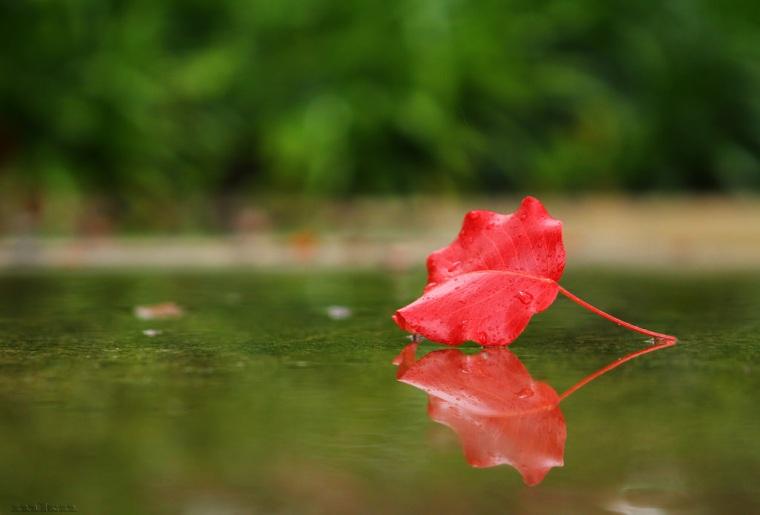 01 a leaf